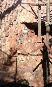 Zoo Joburg - Juillet 2015