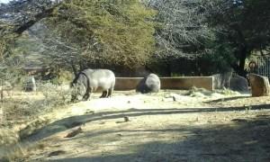 Zoo Joburg - Juillet 2015 (45)