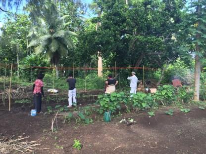 Stringing up tomato seedlings at the Alaki demonstration plot