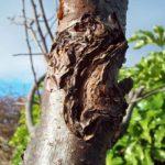 Fruit tree problems