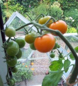 Orange Paruche