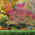 RHS gardens November events