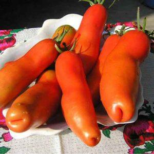 Tomato Red Eros