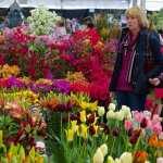 Malvern Spring Festival 2017 highlights