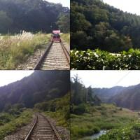 夏天綠油油❖秋天賞紅葉好季節♥江村Rail Bike賞美景不二之選