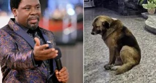wpid-wp-1459154597517 VIDEO: Man 'became a Canine' Throughout Deliverance Session At TB Joshua's Church