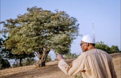 8855021 4027a9e0b43941faa3f56242c68ee366 jpeg jpeg2f360f5951404357acfb7ba615d4dad4 - President Buhari Spotted At His Farm In His Hometown Daura, Katsina (Photos)