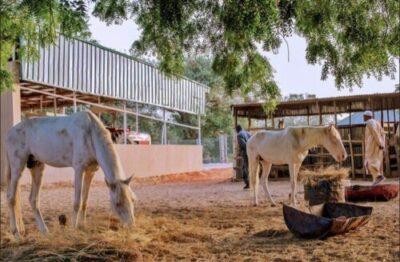 8855025 cc5ffd1cde3a46a180354006992f5c3b jpeg jpeg1a5ba9688c1d05601ef467eded45f71e - President Buhari Spotted At His Farm In His Hometown Daura, Katsina (Photos)