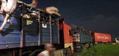 Lockdown: Gov. Wike Arrested 14 Persons Hidden In Trailer Conveying Cows From The North