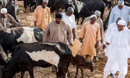 Buhari visit his cows