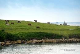 A Trémazan veiem molts cavalls