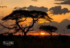 tanzania serengeti sunset