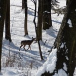 An Insight: Chronic Wasting Disease