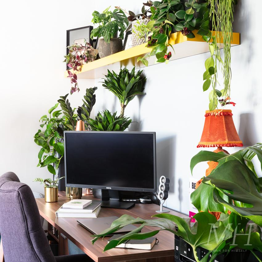 the-joy-of-plants-home-transformation-man-for-himself2