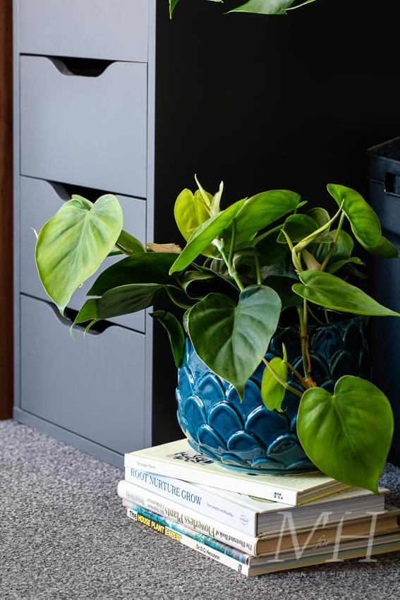 the-joy-of-plants-home-transformation-man-for-himself6