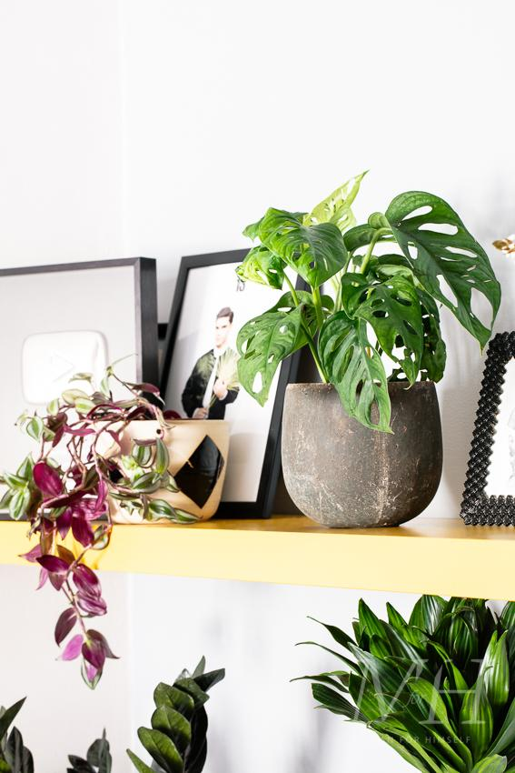 the-joy-of-plants-home-transformation-man-for-himself8