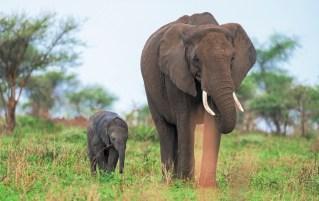 Elefanten Serengeti-feb 2017-13-2