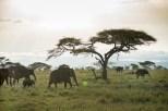 Elefanten Serengeti-feb 2017-3-2