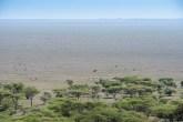 gnus u zebras serengeti migration 2017-9-2