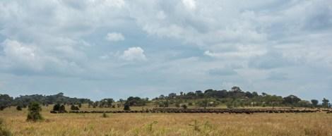 Gnus Wanderung Serengeti 2017-1-2