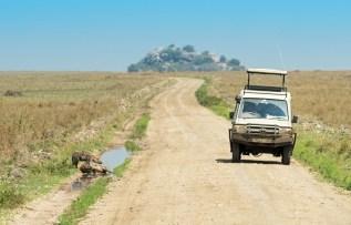 Tüpfel Hyänen Serengeti 2017-3-2