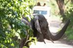Elefant lake Manjara 2017_1-2