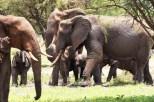 Elefanten Tarangirei 2017-2-2