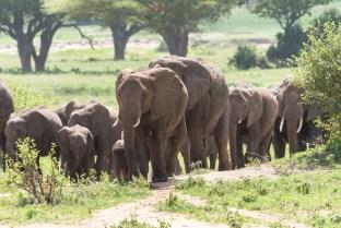 Elefanten Tarangirei 2017-4-2