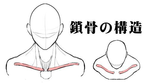 鎖骨の構造と肩周りの描き方 漫画素材工房 Manga Materials