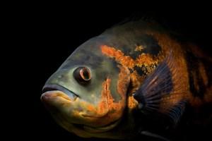 模様が毒々しい魚