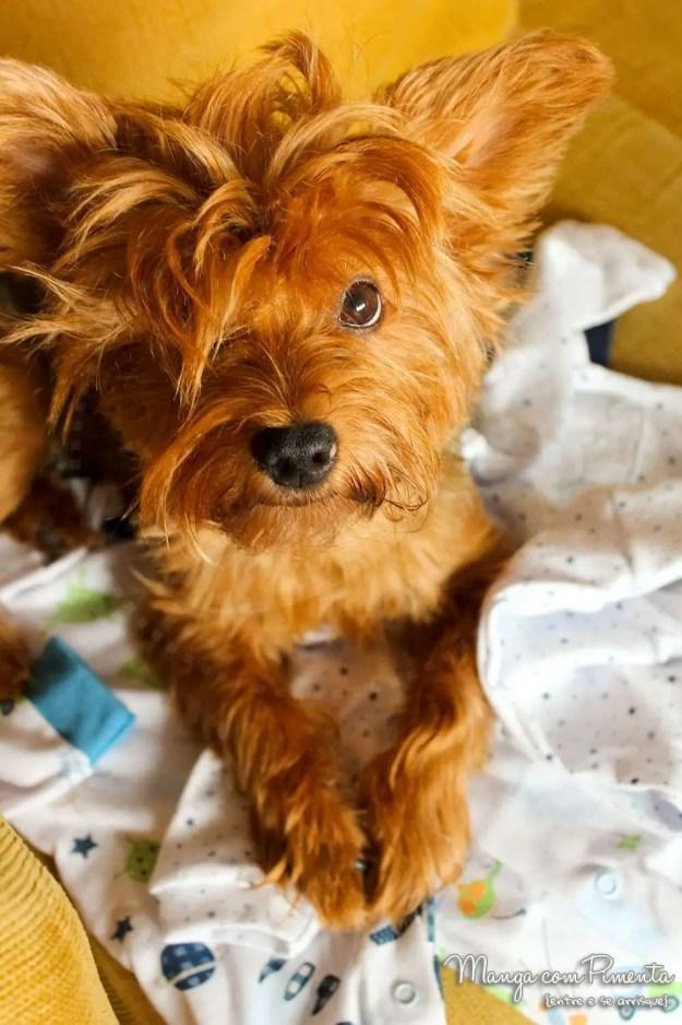 Meu cachorro e o Bebê: processos de adaptação com a chegada de um novo membro na família!
