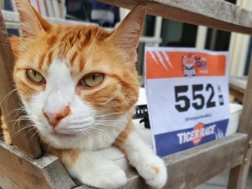 Tiger Race : la course la plus hype du confinement ?