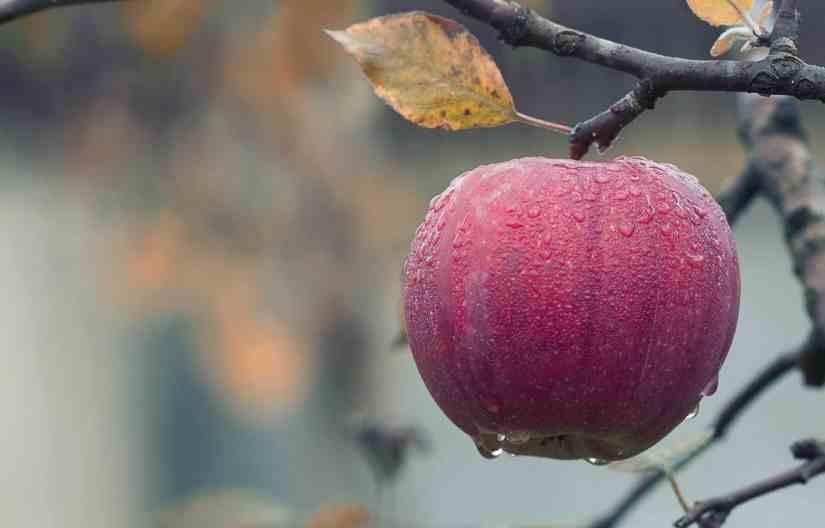 apple cider vinegar mask