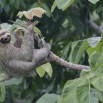 Where in Costa Rica can you see sloths?