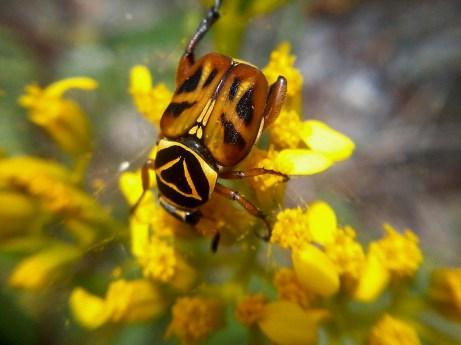 yellow beetle (1)