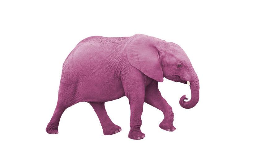 Harm OCD pink elephant