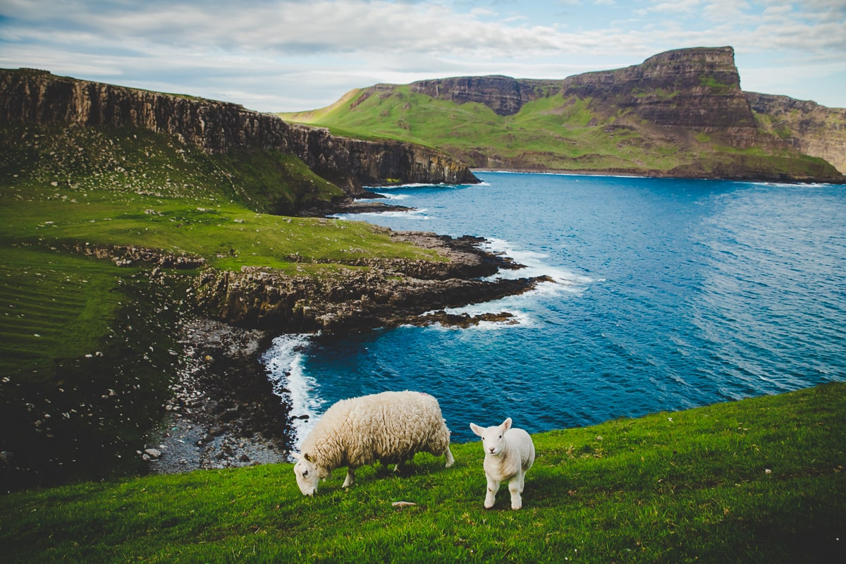 Sheep seen on a Scotland Road trip