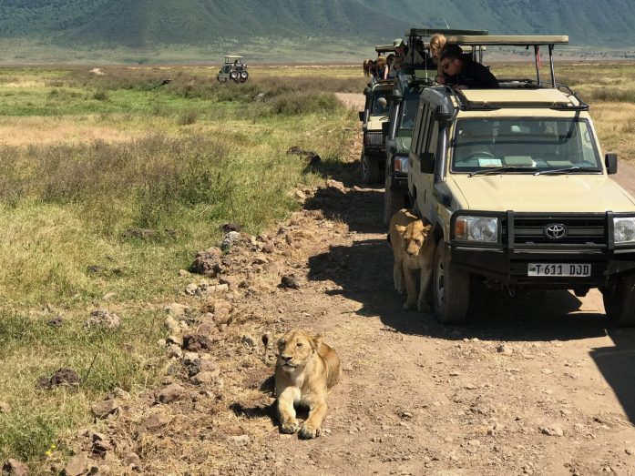While on safari, watch the animals use your safari car for shade or to protect themselves from predators.