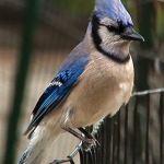 Central Park Bird C