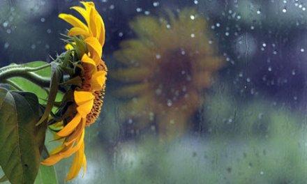 Bóng mưa