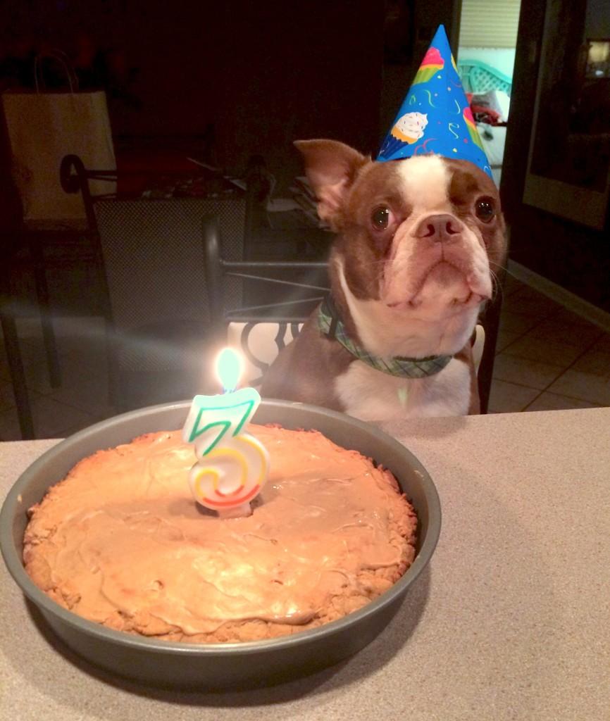 Maniac Mutt Birthday Homemade Birthday Cake For Dogs
