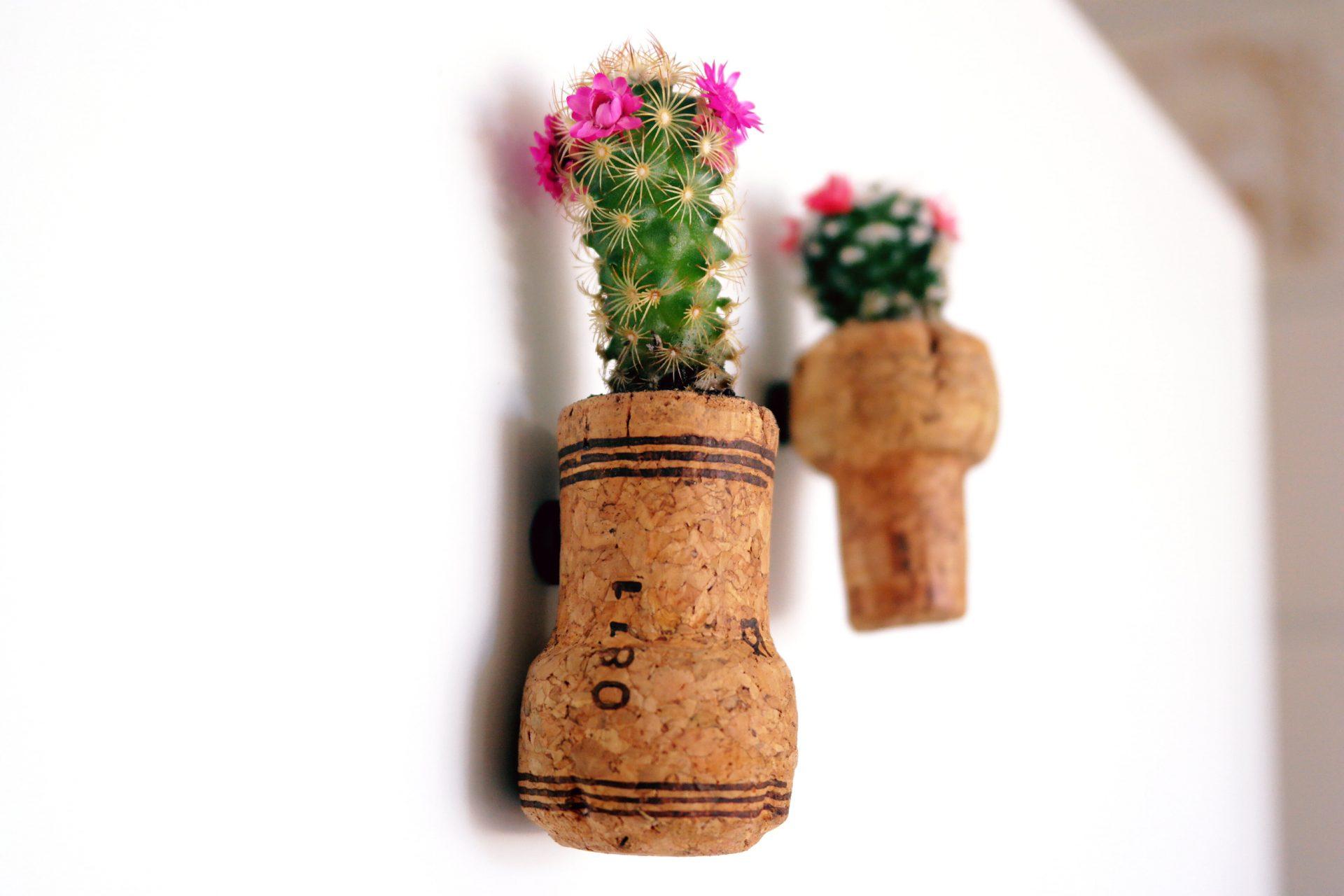 como plantar dentro de rolhas Como plantar dentro de rolhas   DIY