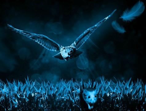 NightOwl2