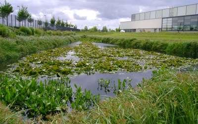 Croire dans l'avenir: réconcilier la nature et l'industrie en renouvelant les ressources naturelles