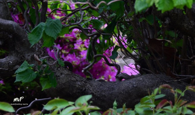 Manifesting everyday wisdom: Beauty in the Shadows