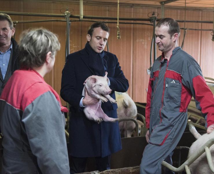 Emmanuel Macron tient, sceptique, un porcelet.