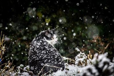 tom der schneekater am 31.1.2019