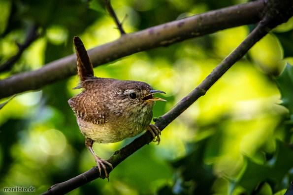 vögel in haus und garten