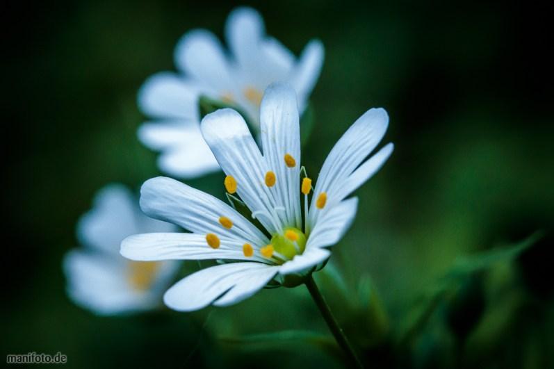 17. April: frühe Blüten im Garten