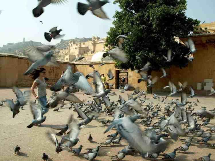India - Rajasthan (Jaipur), Agra, Delhi, Varanasi